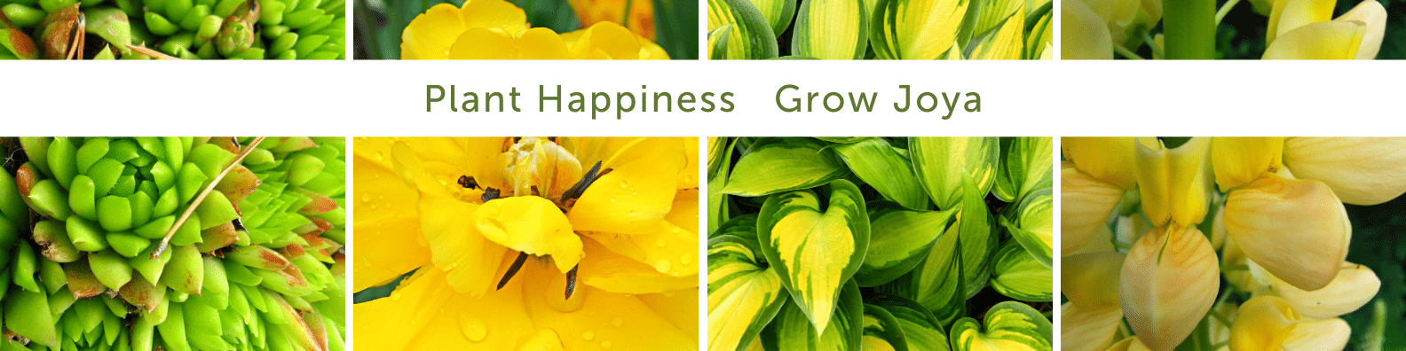 """A collage of plants, with the text """"Plant Happiness Grow Joya"""" overlaid on top."""