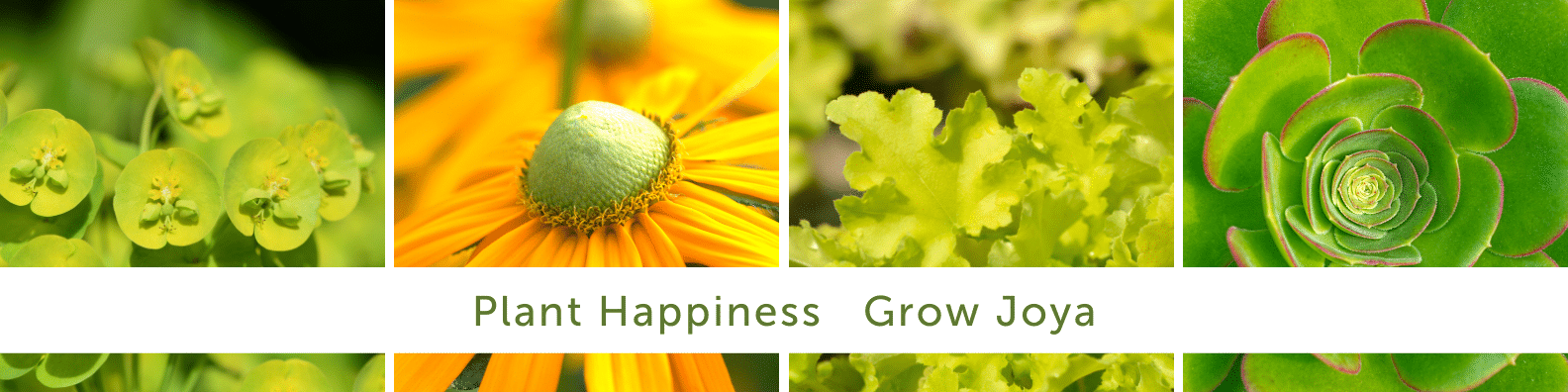 """A collage of close up photos of plants, with the text """"Plant Happiness Grow Joya"""" overlaid on top."""